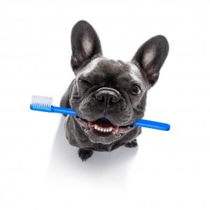 dental plans for Medicare
