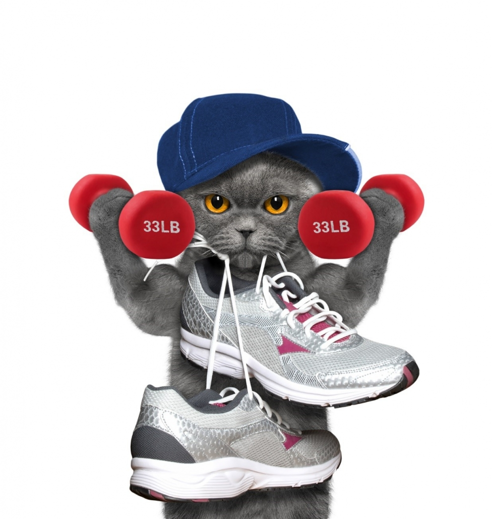 Find out if you qualify for free Medicare Silver Sneakers Gym Memberships